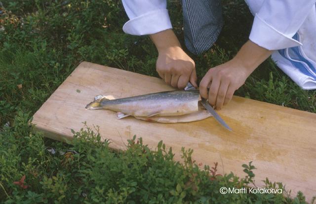 Kalastuskilpailu Muoniossa